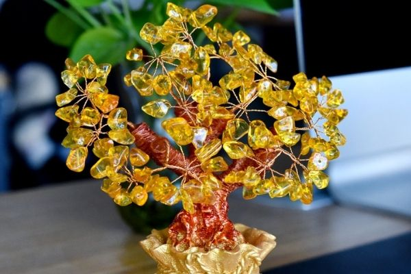 Citrine Tree Meaning, Benefits & Placements